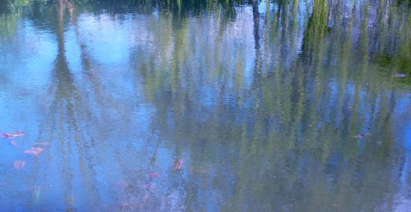 L'étang de Giverny