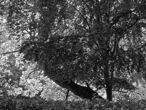 The Luxembourg Gardens in B&W