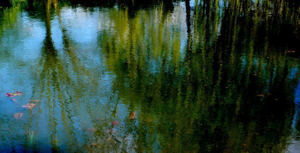 L'étang de Giverny un après-midi de printemps
