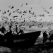 Peyuhue, les barques